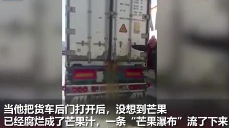 24吨的芒果运输时,没有冷藏,腐烂汁水流了5个小时才完