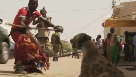 鬣狗为什么怕非洲人?短短一分钟的视频,看的满满的心酸