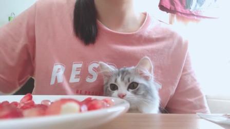 猫:都是家里一份子,我吃一口咋了?