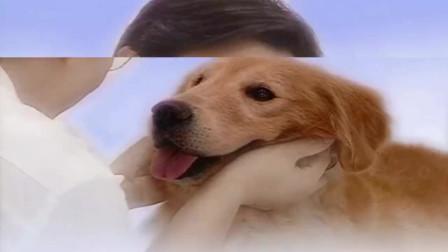 爱在旅途狗狗被心机女绑了起来,逃不出去,却做了这个梦