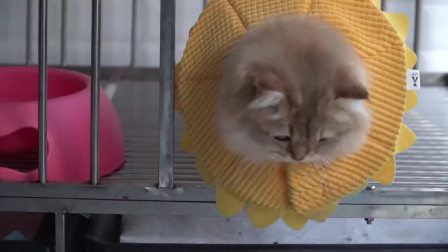 猫咪去狗笼子里没偷到零食,气的抓主人的背包