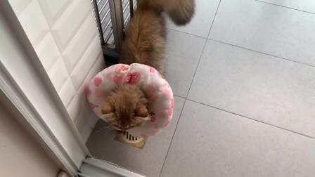 猫咪自己将玩剧卷到笼子里,傻傻的真可爱