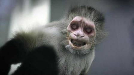 动物园爆发丧尸病毒,动物疯狂攻击人类,比人类变异可怕百倍!