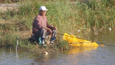 老人钓鱼钓到一只青铜乌龟,背上插着4只箭,专家:罕见国宝