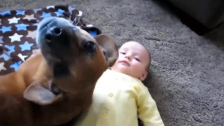 狗狗正在照顾小宝宝,突然发现主人正在拍照,瞬间摆pose配合