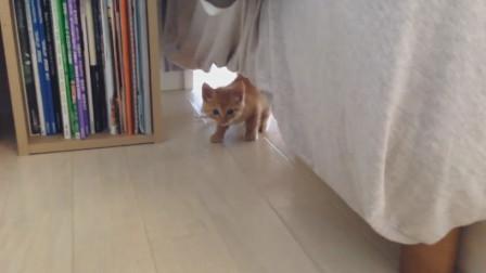 主人早上醒來發現小橘貓躲在床下,竟然還偷瞄主人,模樣萌翻了