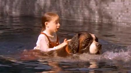 狗狗在院子里玩,不小心掉入泳池,主人的反应让人惊讶