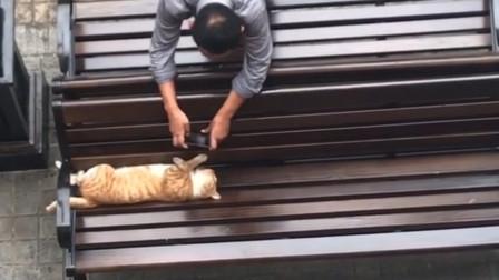 橘猫:这个大爷好坏,偷拍我睡觉的样子