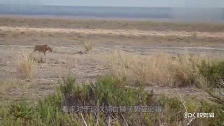 斑马是一种比较常见的动物,而且它们的爆发力很强!