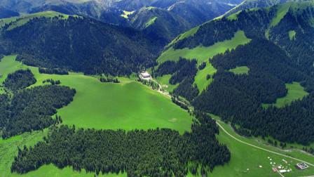 中国有没有原始森林,具体是在哪里呢?今天算长见识了