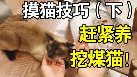 让你看看挖煤猫多粘人~赶紧养啊!让猫爱上抚摸的技巧(下)