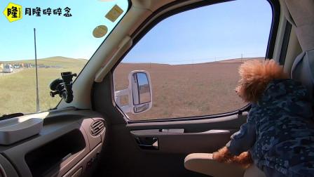 3台房车驻车乌拉盖草原最高处,一早出发去看野生草原狼,被吓到