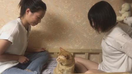 当个猫咪太难了,胖橘猫被两个妹子疯狂调戏