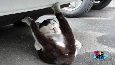 【每日一囧合辑】猫不会用猫砂盆去检查后发现…哈哈哈早发现早接受吧