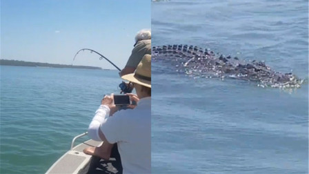 男子钓鱼时拉不动杆 努力扯上来一看竟是条鳄鱼