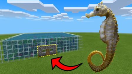 我的世界MC动画:如何在海马养殖场生活