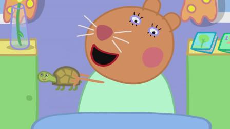 仓鼠兽医抱起了乌龟小土豆