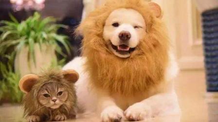 人类为什么特别想养只黏人的猫或者狗?