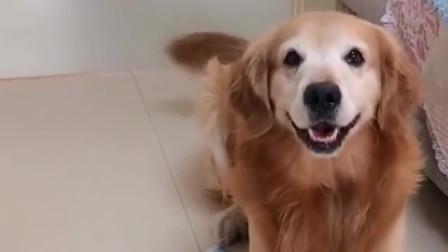现在的宠物狗真聪明,还会加减法,这算是成精了吗?