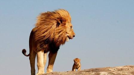 饿到极点的狮子有多可怕,爬上树也没用还差点丢了性命