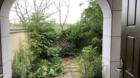 为了种花在杭州租了个院子,荒芜几年的院子会被改造成花园