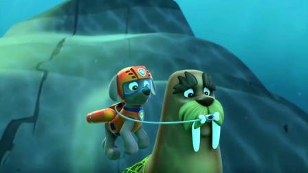 汪汪队:华丽被网子困在海底,莱德和路马去救它,遇到一只大鲸鱼