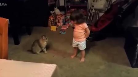 猫咪犯错,后向主人认错的样子太可爱了!