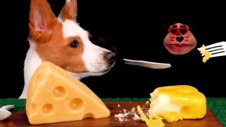 大胃王:韩国吃播小哥竟带着狗狗一起吃香甜可口的奶酪蛋糕!画面真有趣!