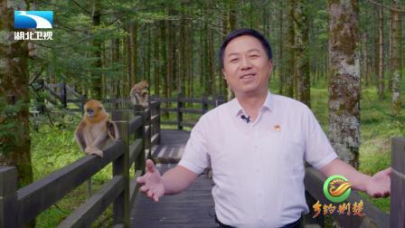 神农架林区人民区长刘启俊为神农架代言
