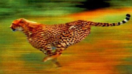 统编版小学语文五年级上册课文朗读7《什么比猎豹的速度更快》