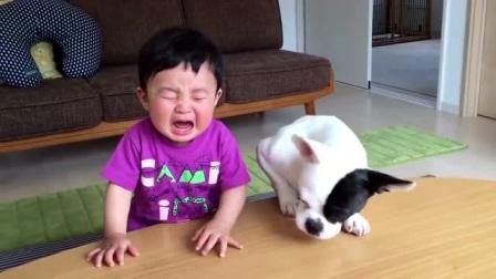 还没入口的零食被狗狗抢走,宝宝愣了几秒后立马大哭,简直太可爱啦