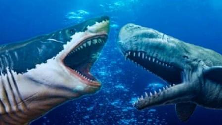 """当虎鲸遇上鲨鱼,谁才是真正的""""海洋霸主"""",结局让人意想不到!"""
