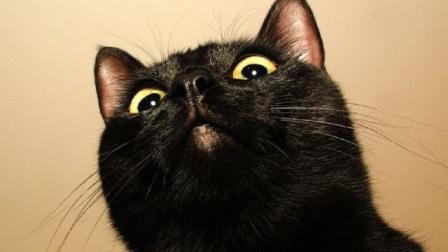 """美女网购了两只""""黑猫"""",养了一年之后,发觉越来越不对劲!"""