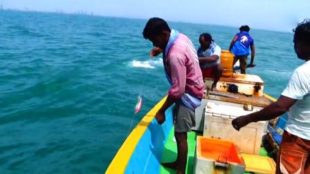 海上钓鱼,大鱼纷纷咬钩,看看是啥鱼?