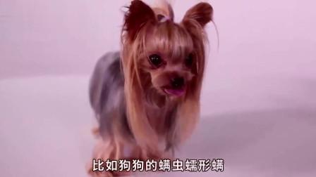 狗狗耳朵上有结痂是什么