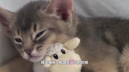 我们学猫叫的时候,为什么猫咪会回应你?它真的能听懂吗