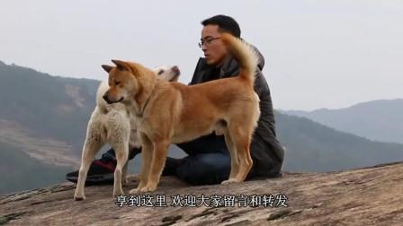 小土狗每天给地里干活的主人送饭,看完开始理解爱狗人士了
