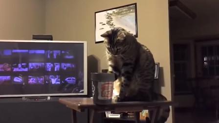 澳洲硬汉控诉,猫咪都是小恶魔