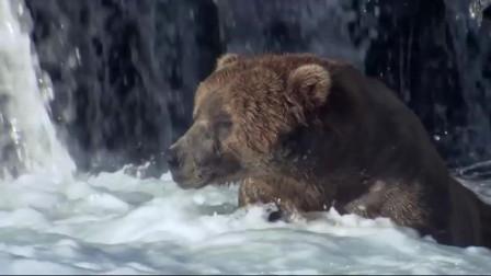 灰熊为什么会按时冬眠
