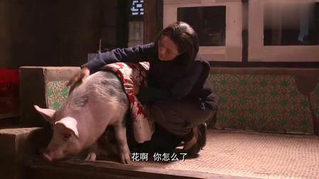 老农民:小伙养的母猪怀了崽子,农民竟拿出这玩意给猪吃,人都不舍得吃!