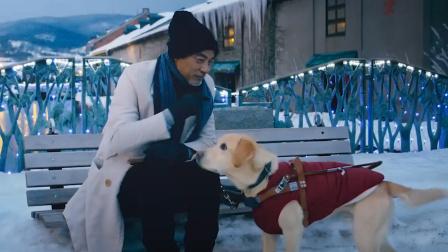 【酷影爆点料】任达华挑战盲人,携导盲犬《小Q》催泪来袭