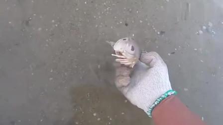 发现一只颜色独特的螃蟹,抓起来一抖,这谁敢要啊