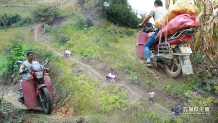 农村小伙用摩托在山间小路拉玉米你们敢上吗
