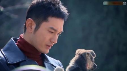 锦绣缘:黄晓明好孤单,抱着狗只想陈乔恩,可惜爱人不在身旁