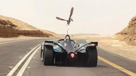 世界上最快的动物游隼,和一辆方程式赛车,进行巅峰对决!