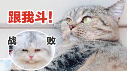 两只小短腿猫表面上看起来萌萌哒,打起架来凶得像小老虎:嗷呜!