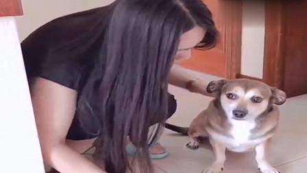 萌宠:男主人正在数钱,女主人要狗狗去偷一点,狗狗立马叼来双面胶