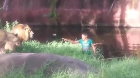 男子不慎失足坠入狮子园,后面的一些列操作,众游客都愣住了!