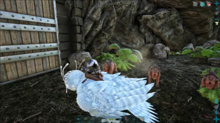 方舟生存进化部落大战13:神话演变  去黑哥哥的老家做客 看来他家的恐龙不欢迎