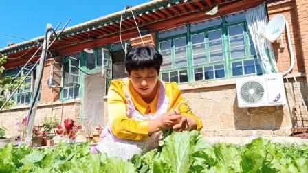 从园子拔点油菜,搭配木耳和腐竹做个家庭小炒,自己种菜就是方便